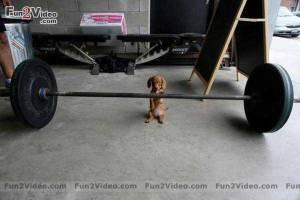 Ginny lifting weights