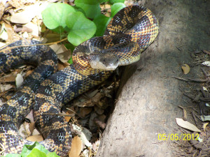 The wood-snake that Richie found