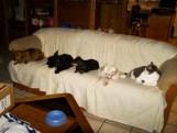 Abigail, Minnie, Bebe, Manley, Fat Cat
