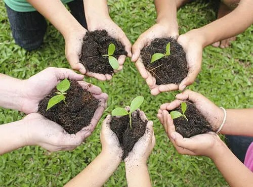 Kids' hands holding soil and plant sprouts