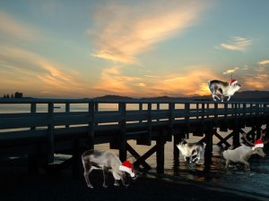 Reindeer-on-Days-Bay-Wharf