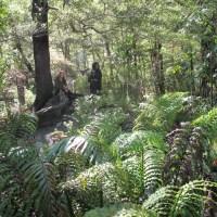The ruins of Rivendell, Kaitoke National Park