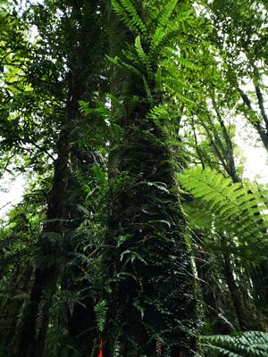 Puketoki Forest Reserve New Zealand