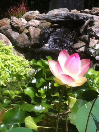 lotusfall