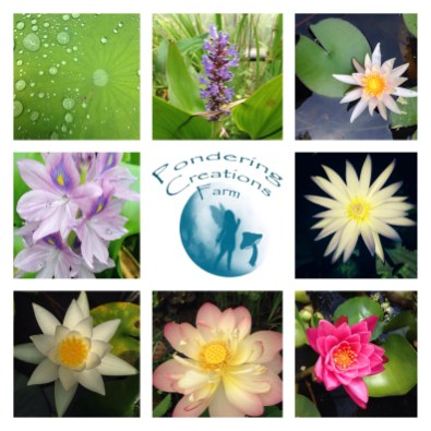 Pond Plants For Sale in CT, Aquatic Plants and Fish