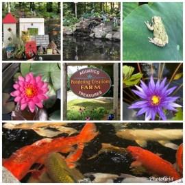 Aquatic Plants & Fish Farm