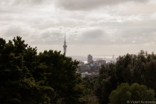 View of downtown and SkyCity Casino from Mt. Eden. © Violet Acevedo