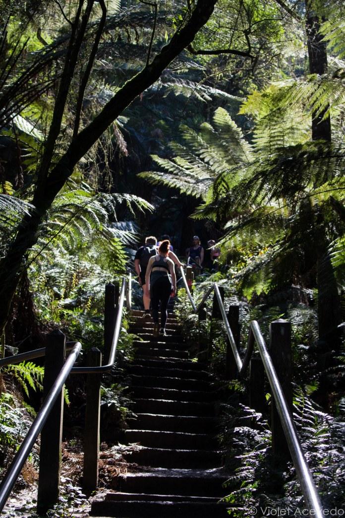 Up the 1,000 steps track. © Violet Acevedo