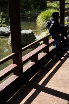 Inside the Japanese Garden of Contemplation. © Violet Acevedo