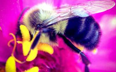 The Magic of Bees and The Beauty of Numbers in Nature