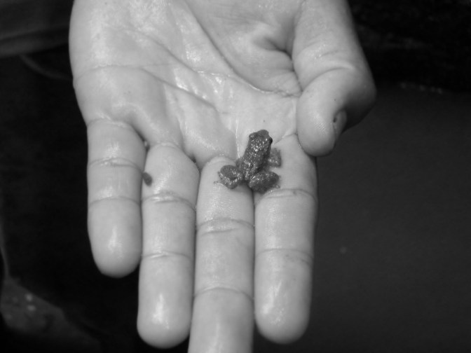 Frog, Ecuador, Black and White
