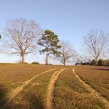 field, trees, instagram