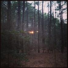 woods, sunset, Instagram