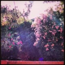 Flowers, instagram