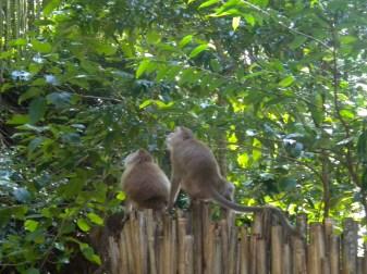 Thailand, Monkeys on fence
