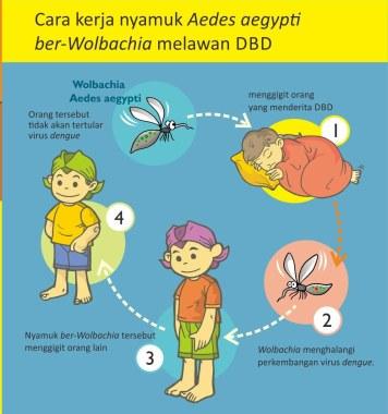 Cara Kerja Nyamuk Aedes Aegypti ber-Wolbachia