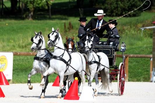 Jean Charles Davoust et son team de 4 poneys Welsh gagnants en concours d'attelage international - photo Nadine TOUDIC