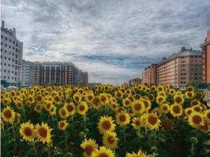 129 barrios en Madrid   Ensanche de Vallecas   Villa de Vallecas   Madrid   Avenida de girasoles en el PAU de Vallecas
