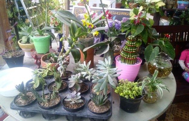 bunga-dan-pot-koleksi-toko-tanaman-hias-karanganyar-Omah-Kembang