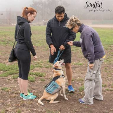 Dog Training San Francisco