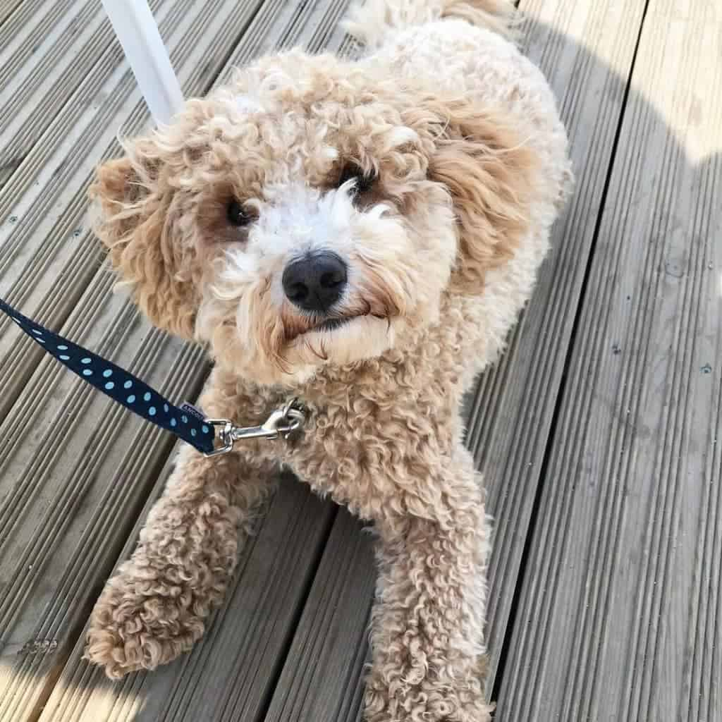 What S The Best Dog For Me Find Your Perfect Puppy Match