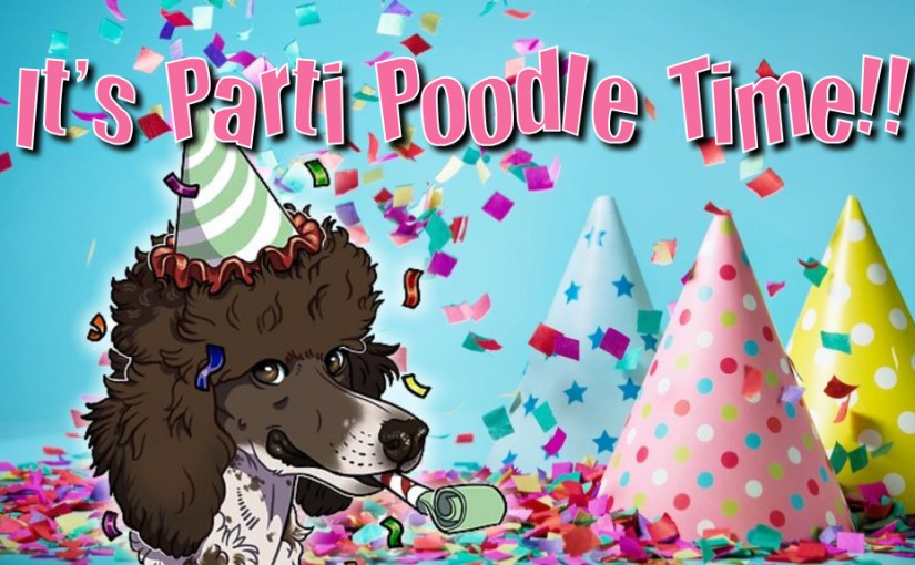 Standard Parti Poodles For Sale - Beautiful Parti, Tri and Tuxedo
