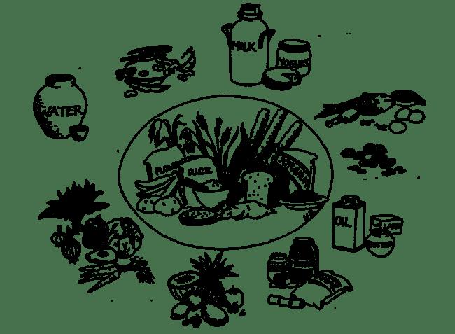 Resultado de imagen para healthy food drawing