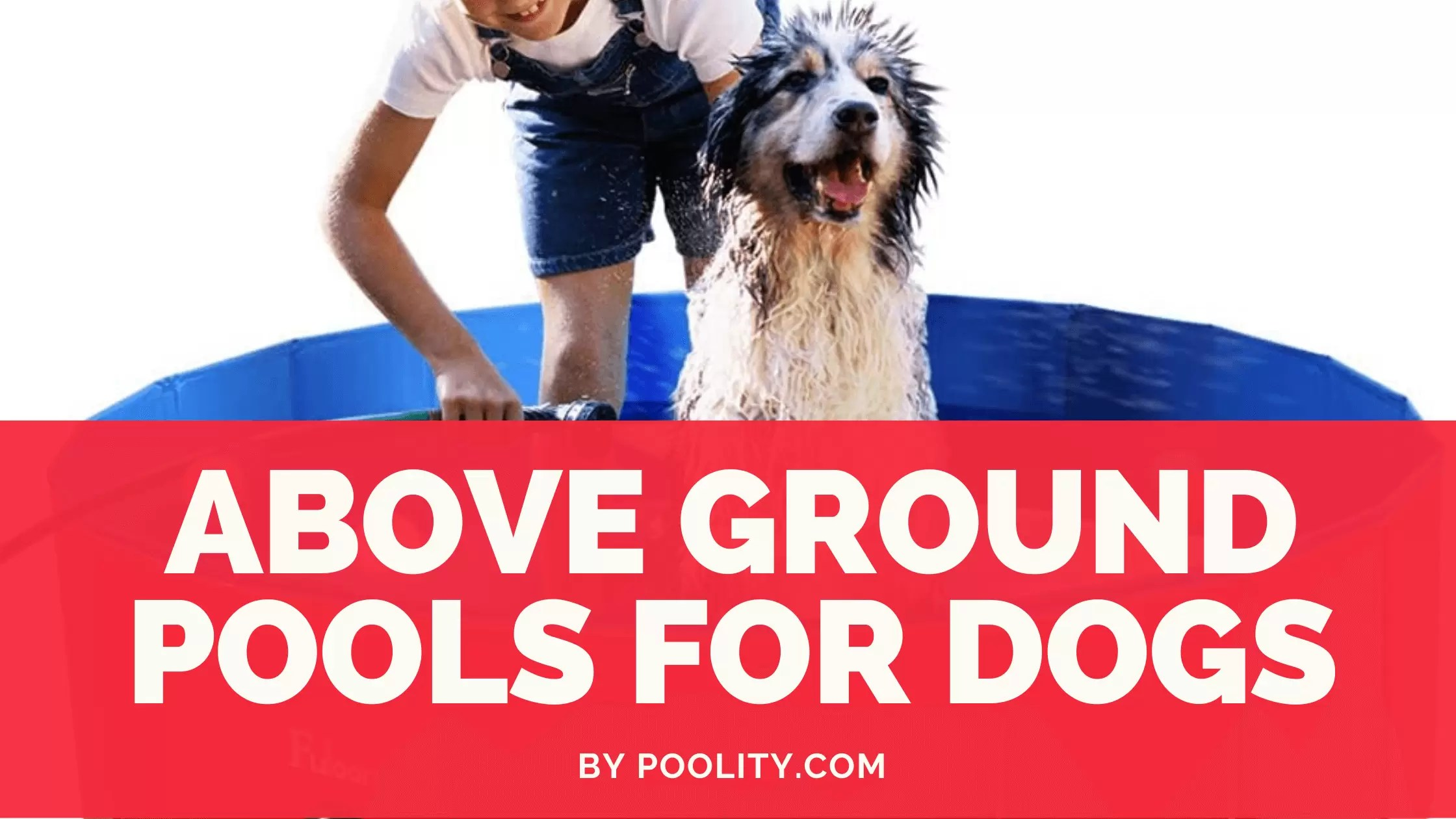 7 Best Above Ground Pools for Dogs This Summer 2020 2