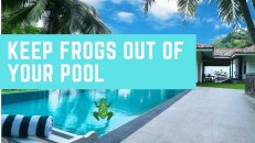 keep frogs Out of Your Pool