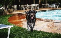 dog in pool side