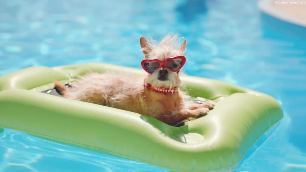 Should I Let My Dog In My Swimming Pool?