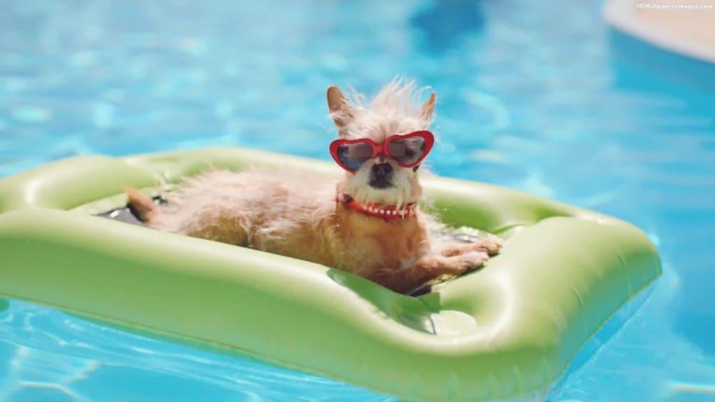 Should I Let My Dog in My Swimming Pool? | Poolmax Pool Builder