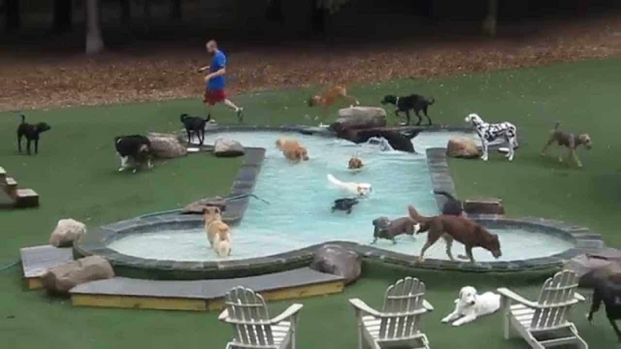 bone shape pool