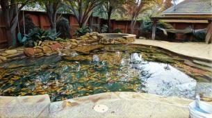swimming pool in McKinney, Tx. full of leaves