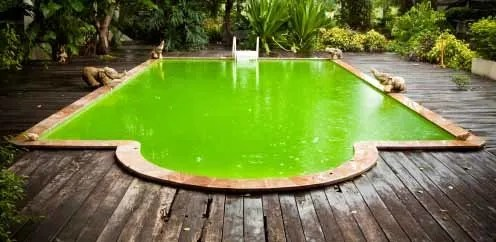 How to clean green pool