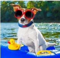 Cool Dogs Pool