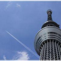 はとバスツアー半日東京観光コース一覧!おすすめなのは?