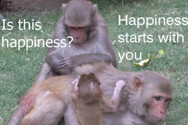 happiness gratitude poonam mashru
