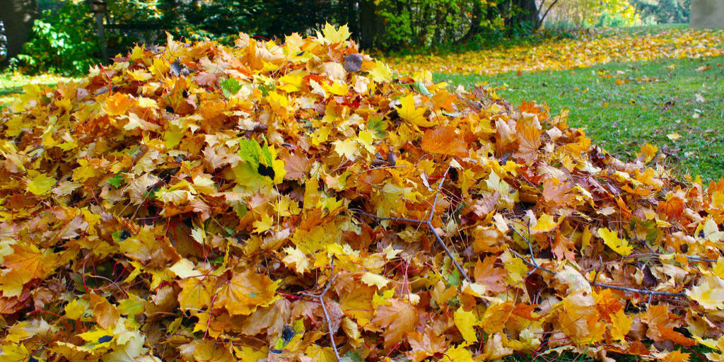 It Ok Leave Leaves Lawn