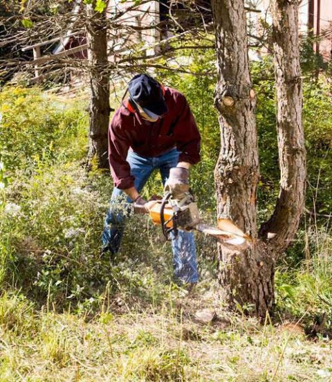 When it comes to the hard work of felling trees and cutting them into firewood, there's just no substitute for the chain saw. This machine is loud, oily and smelly—attributes you'll quickly forget after you drop a tree in under a minute. A couple of hours with one is enough to prepare a pickup-full of firewood or to whittle down a big pile of brush created by a windstorm that just swept through. These saws have been around for nearly 90 years and have improved steadily all along. Today's machines are easy-starting, well-mannered and have a high power-to-weight ratio. Most important, they cut with a vengeance. In fact, they're so good, it's hard to find a bad one. Still, clear differences emerge between homeowner and pro ­models. To find out what those are, we spent three days pruning an ancient orchard, felling trees and crosscutting them into logs. The ­seven saws we tested had engines in the 35 to 38 cc range with bars 16 to 18 in. long. Here's what we found, after the smoke cleared and the sawdust settled.