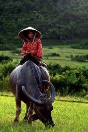 Vietnam © Bao Thach Nguyen