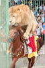 animal show in china