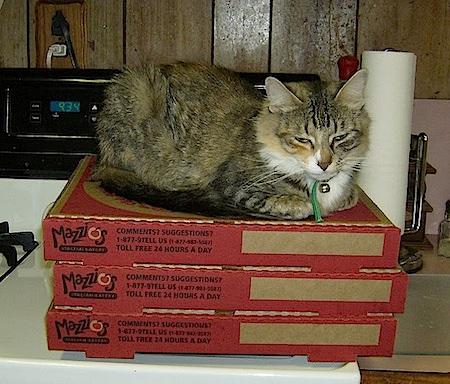 pizzaneko-4.jpg