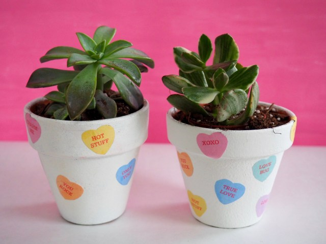 DIY Candy Heart Succulent Pots | Popcorn and Chocolate