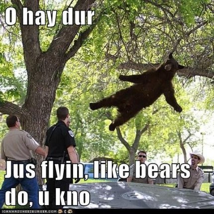 Bear-Hanging-With-Tree-Funny-Image