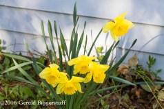 aprilflowers-7