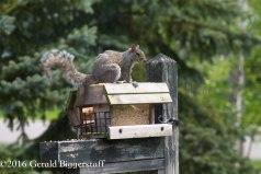 squirreleat-14