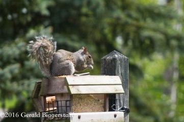 squirreleat-22