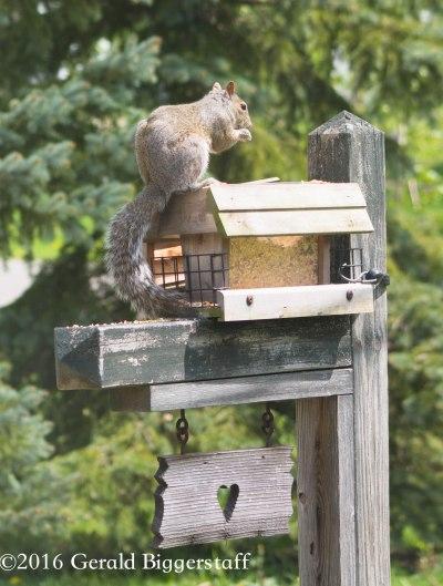 squirreleat-45