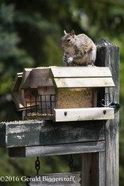 squirreleat-53